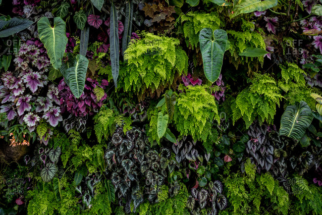 October 02, 2018: Close-up colorful plants at Singapore gardens