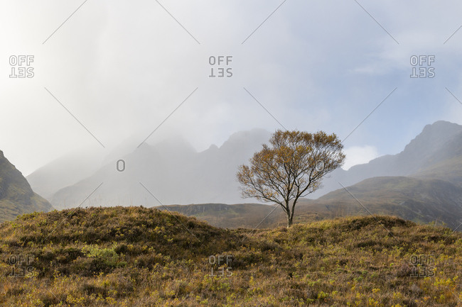 A lone tree and the Cuillins on The Isle of Skye in the Scottish Highlands