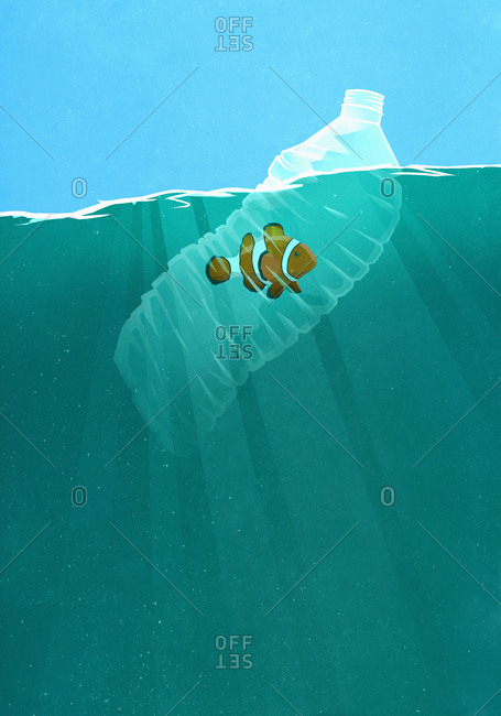 Fish trapped in plastic water bottle in ocean
