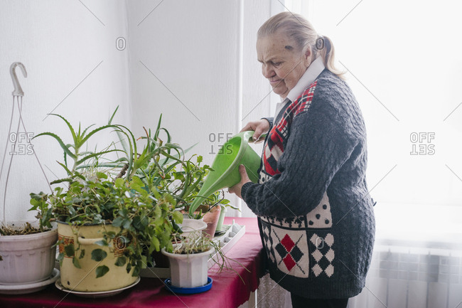 Grandma at home in the village watering plants on the table