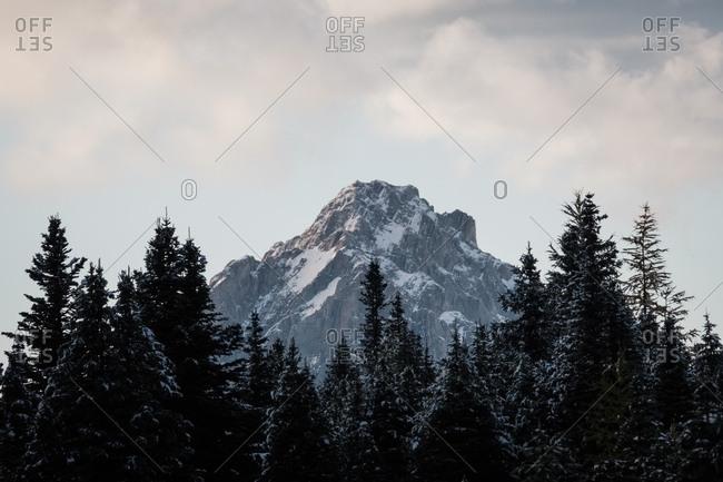 Snow-tinged mountain peak emerges behind regal coniferous trees