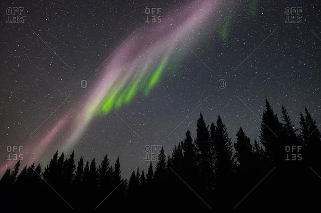 Aurora (Northern Lights) streak across a starlit sky above coniferous trees