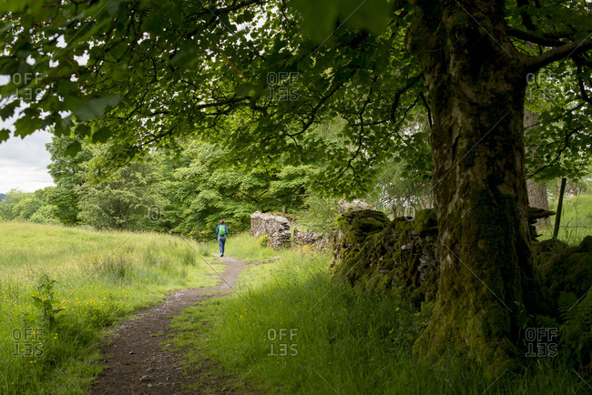 A woman walking in the Lake District near Tarn Hows and Hawkshead