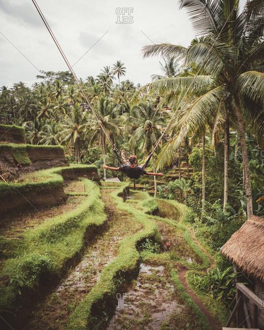 Back view of man on swings above lush green plantation among palms, Bali