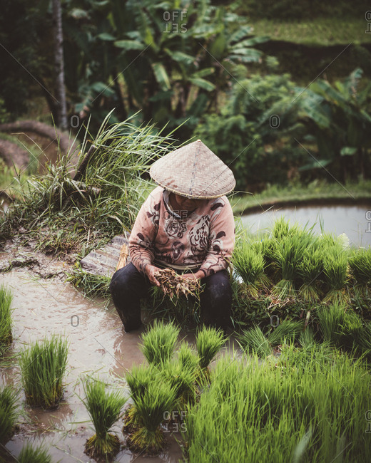 Person in conical straw hat sitting on ground working on green tropical plantation, Bali