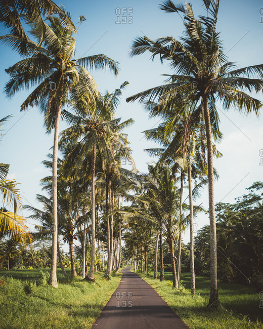 roadway in green tropical terrain with tall palms, Bali