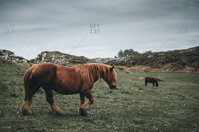 Side view of brown horse eating food from grass on rural background