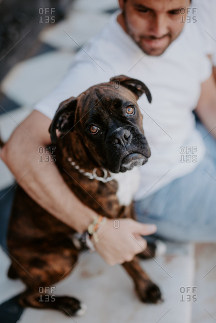 Side view of adorable thoughtful boxer dog in hands of caring bonding owner