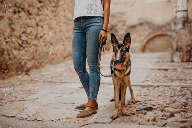 Cute german shepherd walking on cobblestone pavement with crop owner standing near