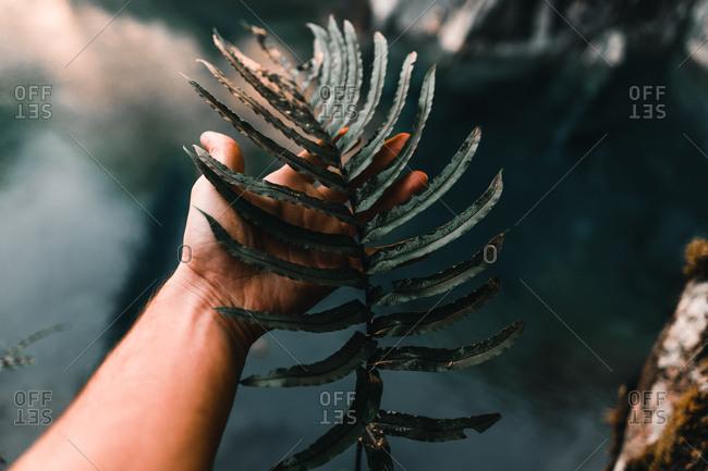 Dark green big and torn exotic leaf in hand on background of vegetation in Lake Wanaka and Lake Hawea in New Zealand