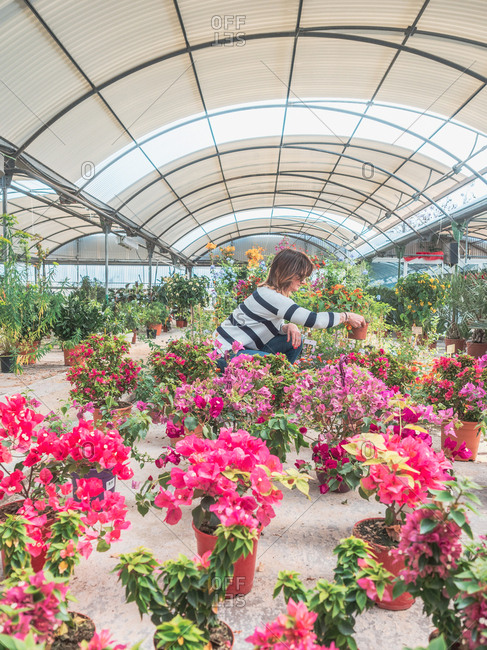 Side view of woman sitting on hunkers on flower market and choosing plants indoors