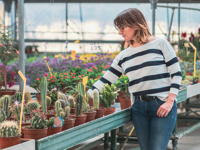 Adult woman in striped blouse and jeans choosing potted succulents in greenhouse
