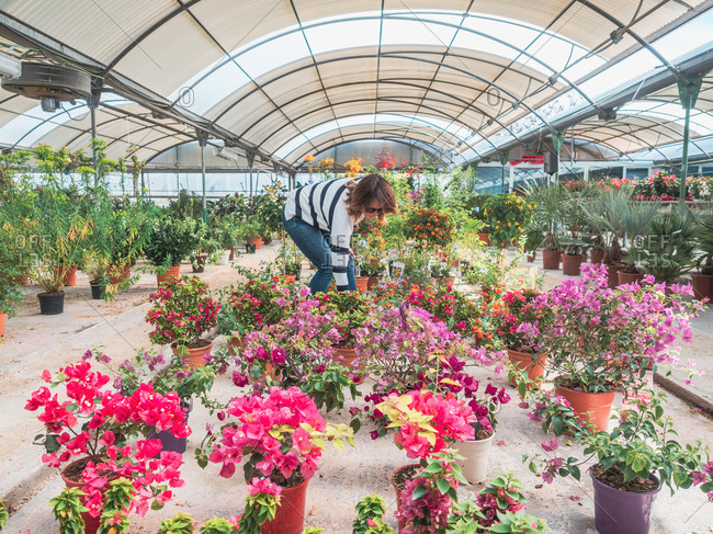 Female customer choosing flowers in greenhouse