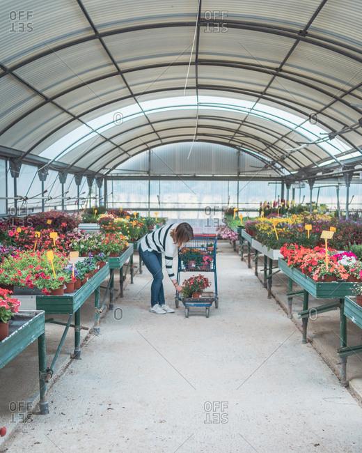 Female customer choosing flowers in greenhouse