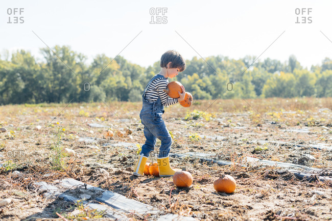Side view of hardworking kid in denim and yellow rubber boot holding orange small pumpkins on farmyard