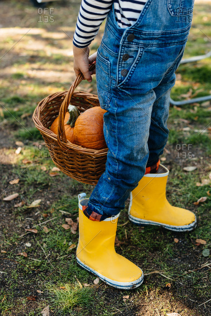 Child in denim overalls collecting pumpkins in yard