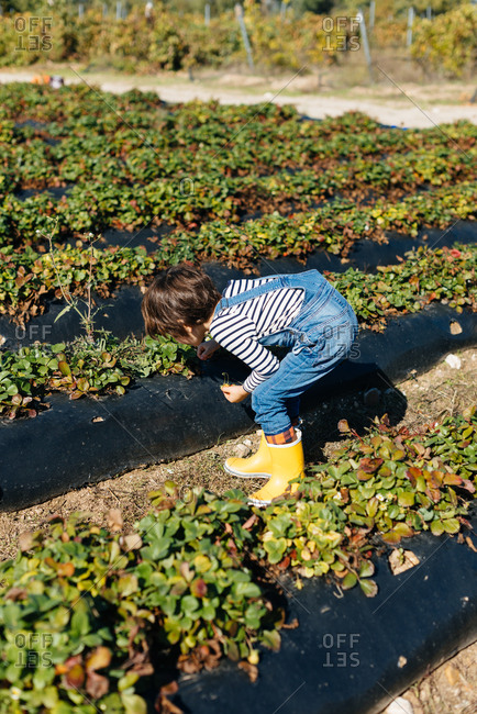 Child touching leaves in bushes in garden bed