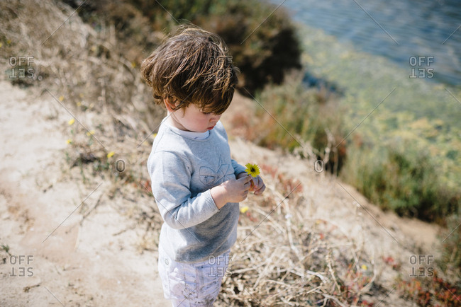 From above side view of adorable kid seriously looking at yellow flower in hands on dry mountain hill in sunny day