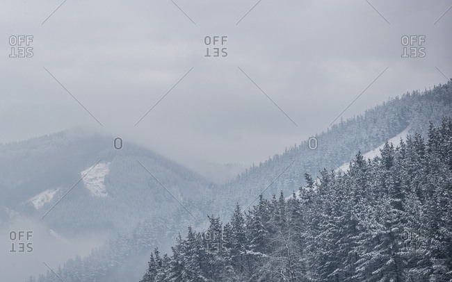 Beautiful valley with coniferous woods on mountain slope in heavy snowstorm