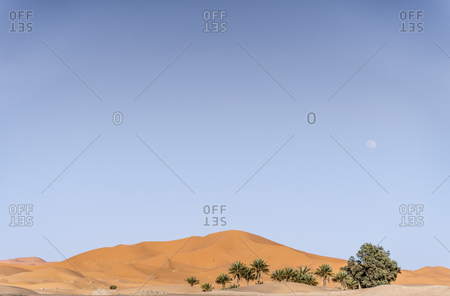 Landscape of palms and oasis in the middle of desert