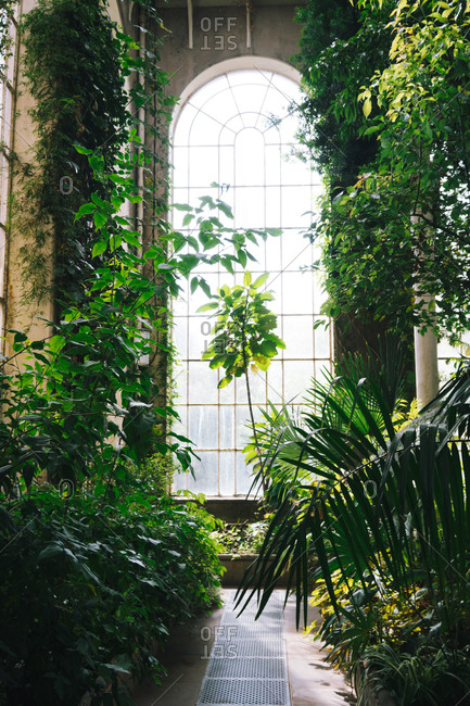 Green plants and bushes inside of old greenhouse with high ceiling and arched window, Scotland
