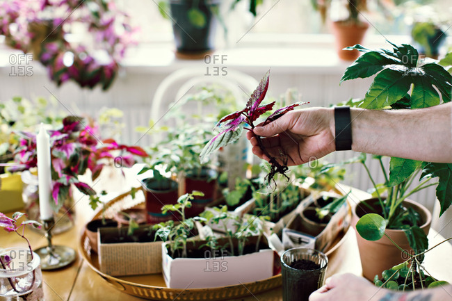 Cropped hand of male environmentalist holding seedling at table in room
