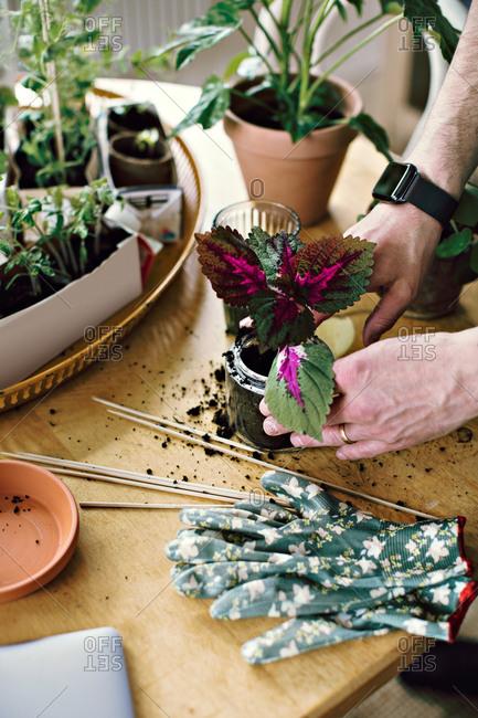 Hands of man planting seedling in jar at table in room