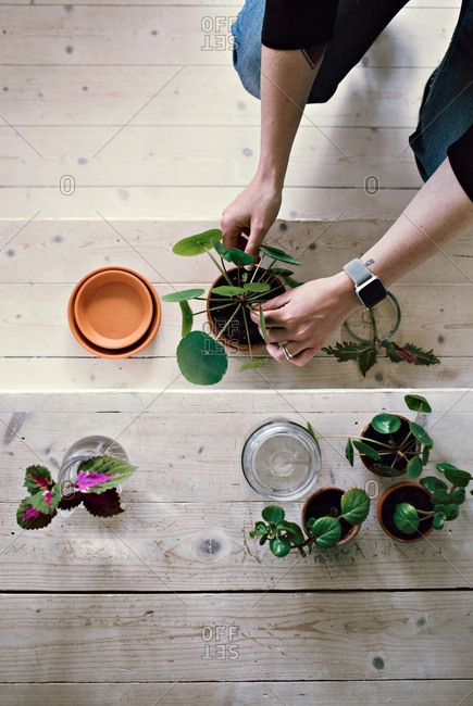 Directly above view of woman potting plant on wooden steps at home