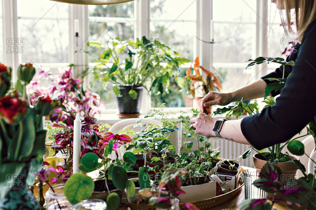 Midsection of woman planting on table at home