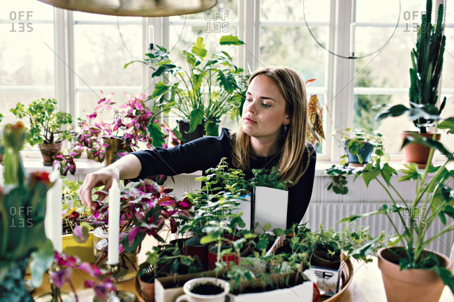 Mid adult woman gardening at table against window in room
