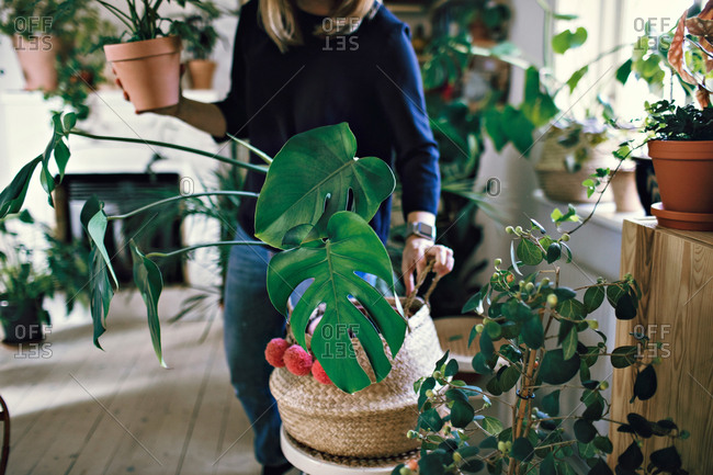 Midsection of woman holding potted plant standing in room at home