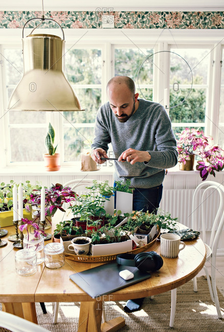 Man photographing plants on table in room against window at home