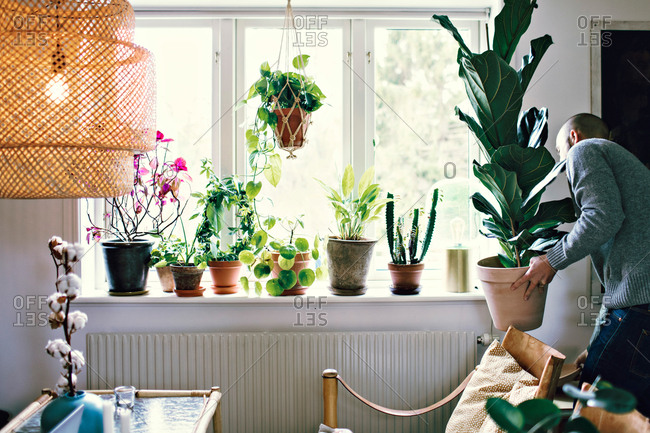 Man carrying potted plant by window in room at home