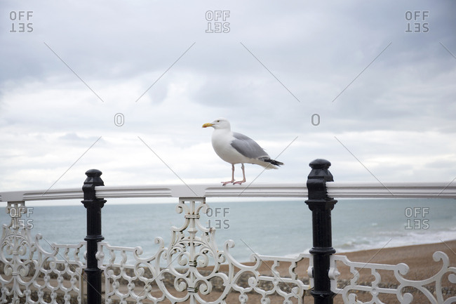 Seagull on decorative pier railings on overcast day, Brighton, England