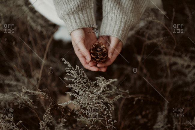 Close up of a woman holding a pinecone found in the forest