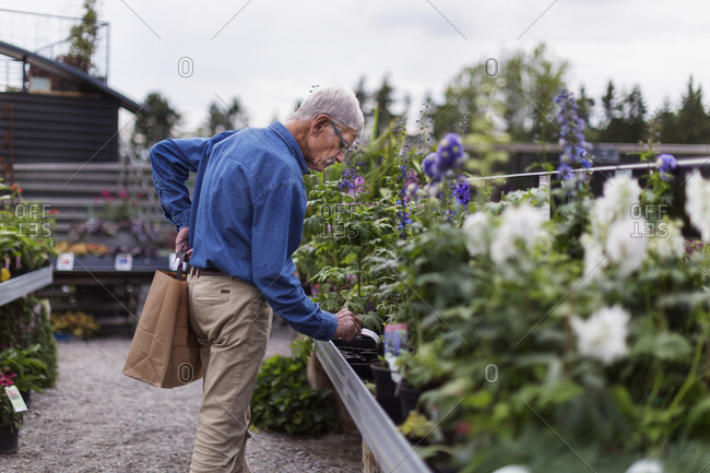 Senior man in garden center