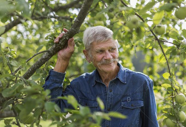 Senior man under tree