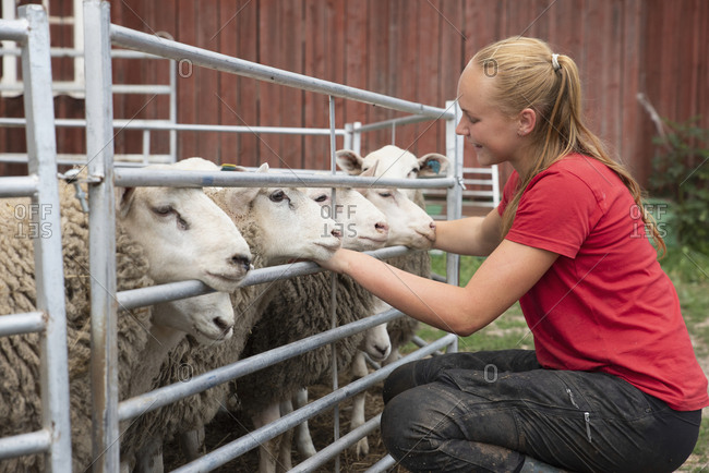 Teenage girl stroking sheep