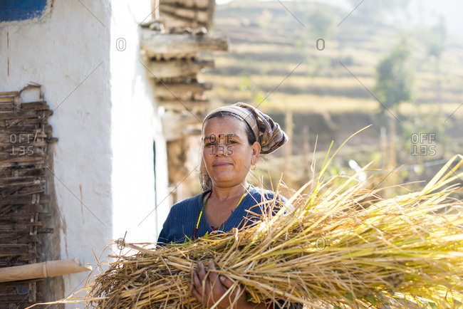 Diktel, Khotang District, Nepal - December 9, 2015: A woman with a bundle of grass collected as fodder for her animals