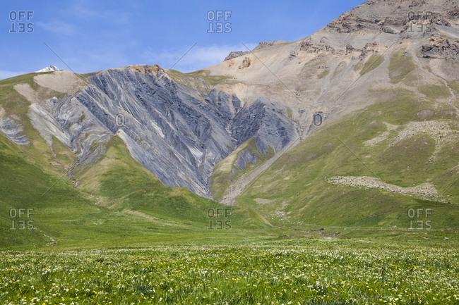 Field of flowers below Cruq des Aiguilles, Hautes-Alpes, France.