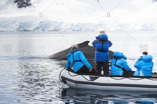 Tourists are watching a humpback whale in Wilhelmina Bay, Antarctic Peninsula, Antarctica.