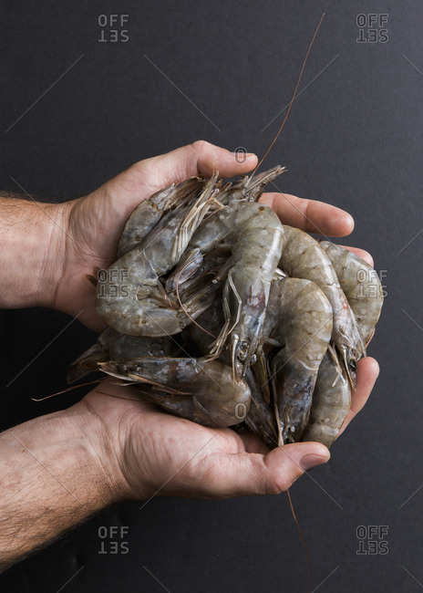 a handful of gulf shrimp