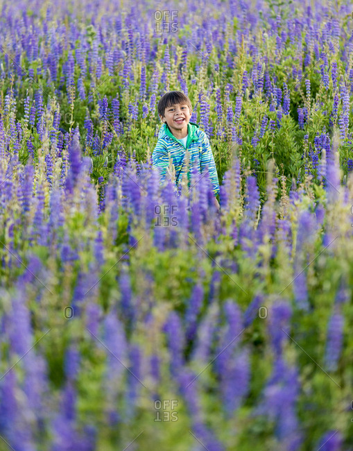 Young boy playing in filed of lupine
