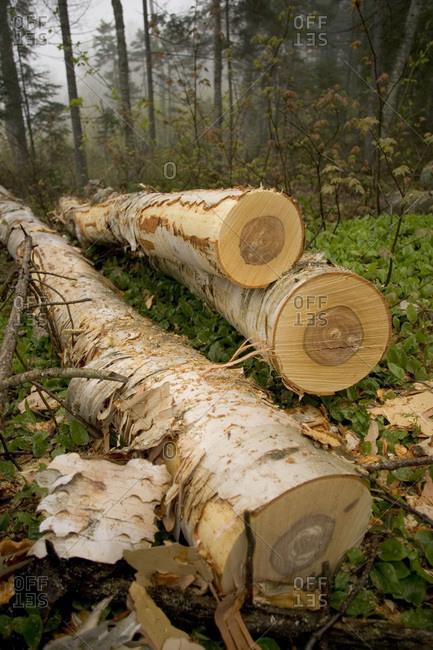 Logs pile up on Plum Creek land near Jackman, Maine.