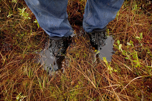 A hiker with wet feet slowly sinks into the spongy surface of #5 bogin Maine's North Woods near Greenville.