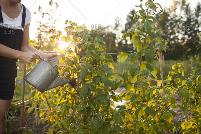 A Woman Waters Her Garden With A Watering Can In Fort Langley
