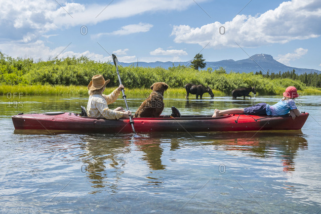 Mother, daughter and dog kayaking past moose on riverbank, Henrys Fork, Snake River,†Rexburg, Idaho, USA