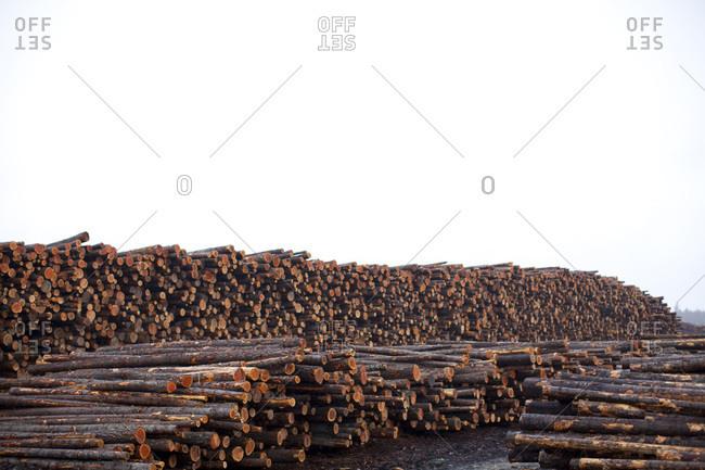 Cut logs in North Idaho.
