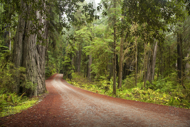 Scenic image of road going through Redwood National Park, CA.