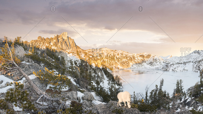 A mountain goat overlooks the Enchantment Lakes WIlderness